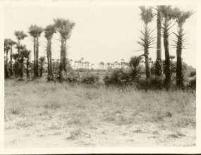 1980 Auroville greenbelt