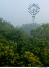 Auroville - a lush forest today