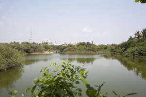 Regenerated city estuary Chennai