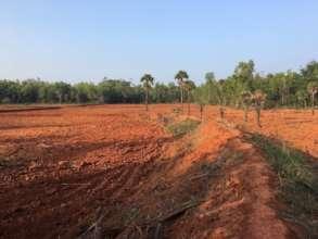 Local landowner eradicating vegetation for farming
