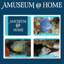 Amuseum@Home includes over 100 activities.