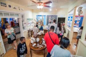 Amuseum Visitors