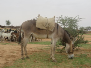 Donkeys make so much possible for families