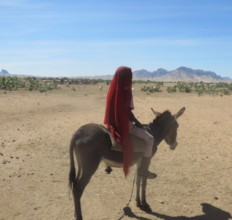 A Donkey is the only Transport in Darfur
