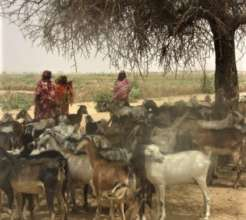 Women in Darfur with their goats.