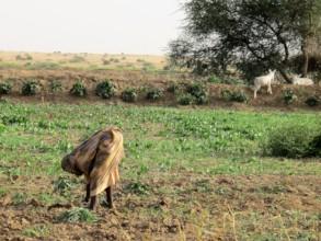 Planting crops in Darfur