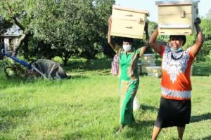Caregivers picking beehives