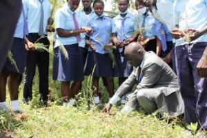 Tree planting in schools