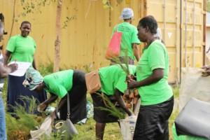 Tree distribution to caregivers