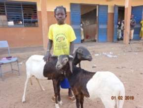 Haoua with her lambs