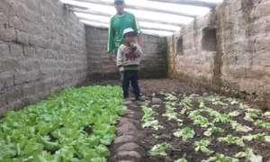 Vegetable garden in Pichigua