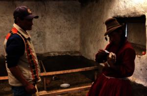 farmer medicating a guinnea pig