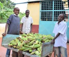 Maize Harvest from Food Security Programs