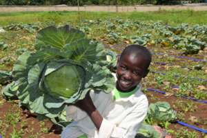 Cabbage from our farming program