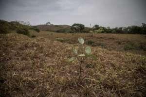 Azuero dry season