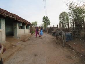 Rural Village Life In Bandhavgarh