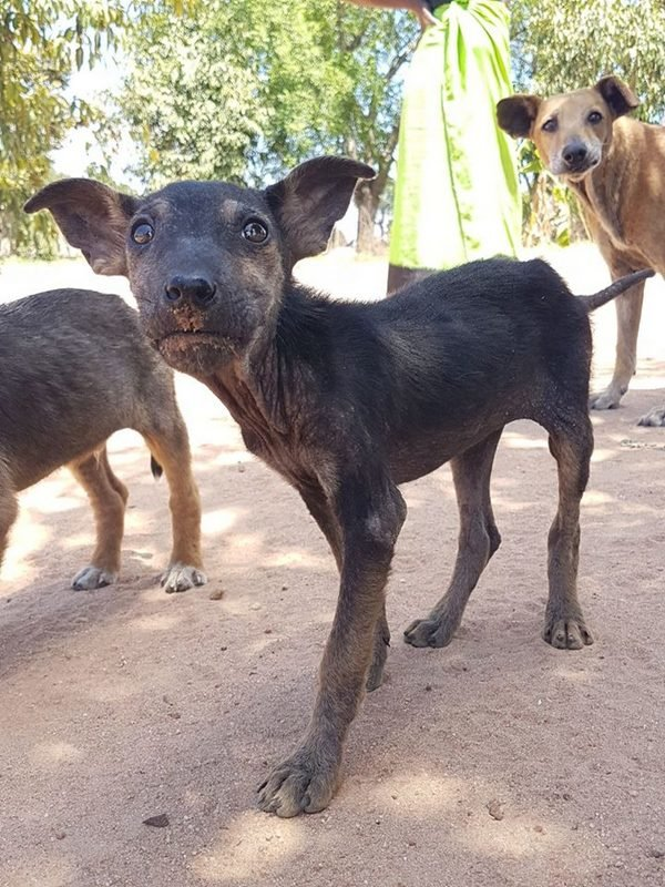 Help us to sterilize dogs in rural South Africa