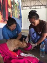 Our Vet Nurses rescuing an animal in distress