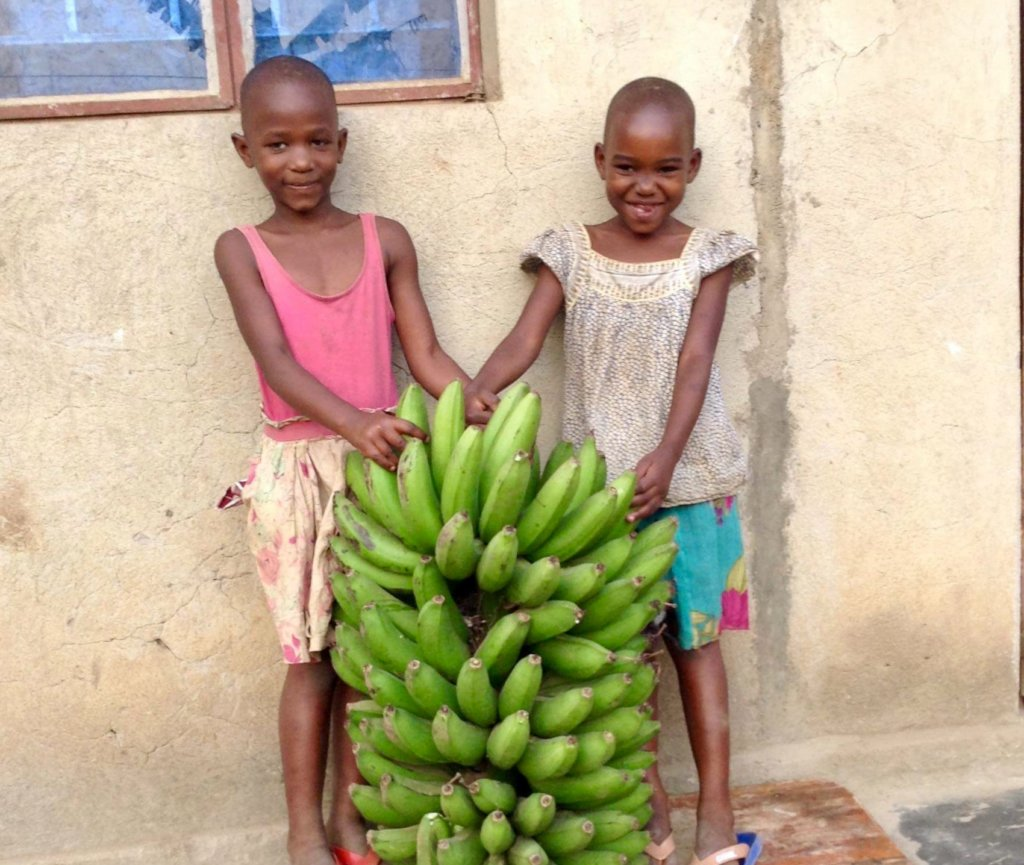 Help us plant 1 acre of banana trees