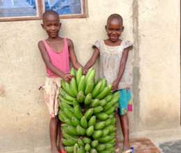 Help us plant 1 acre of banana trees
