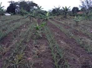 Farm growth progress
