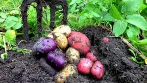 Creating a kitchen garden for the Siaka school