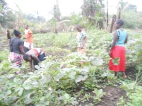 CSD women Farmers Okra garden