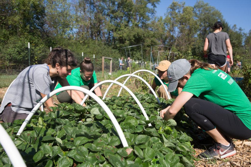 Rebuild the Nelsonville Community Garden