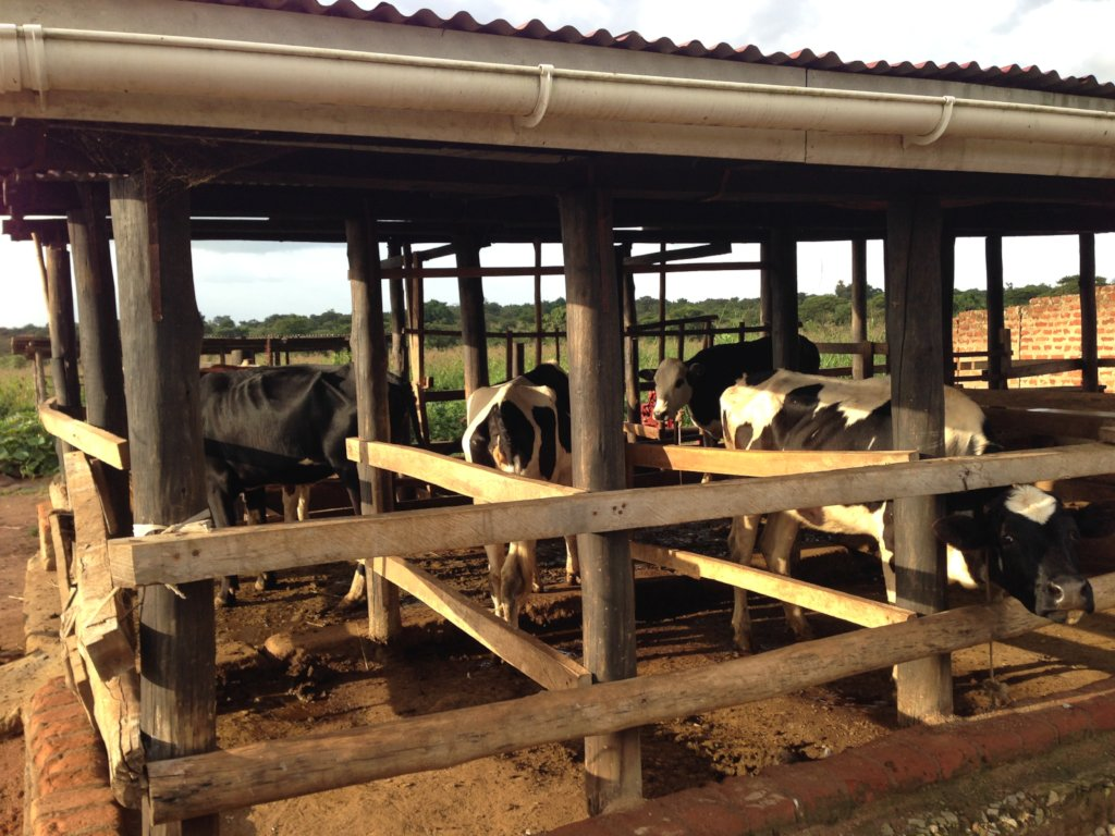 Empowering 240 self-help groups in Gulu