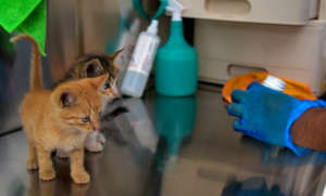 Deworming treatments for kitties too!