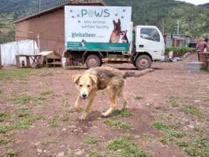 """""""PAWS Patrol"""" Mobile Clinic"""