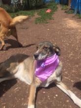 Rosie in her new bandanna!