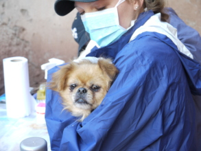 Rescued street dog receiving medical care
