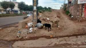 Dogs raiding rubbish on a street corner