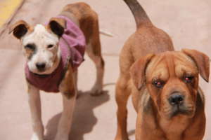 Obvious eye infections in dogs on the street