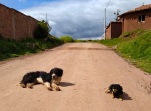 Free roaming dogs relaxing on the street