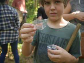 Discovering insects in Cambodian Nature