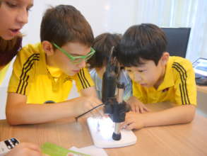 Exploring Insect Anatomy