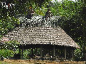 Hamlet near Ituruka. Sector III. Gran Sabana.