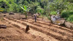 Creating Organic Vegetable Garden