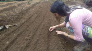 Planting seeds in vegetable beds