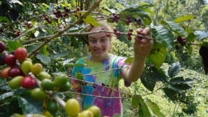 Selective harvesting of shaded coffee