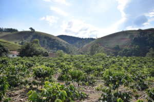 View from the coffee plantation