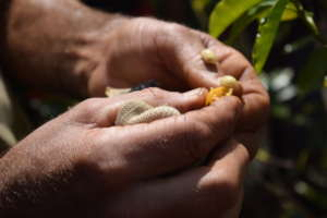 Sustainable agriculture for small farming families
