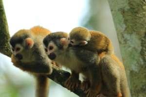 Monkey Release