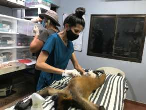 Physical Examination of Spider Monkey