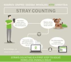 How the process of stray animal counting look like