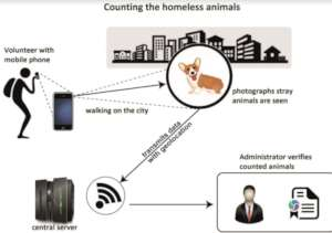 The process of stray animal counting