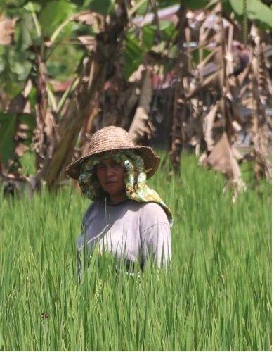 Adopting organic farming near Mount Kinabalu