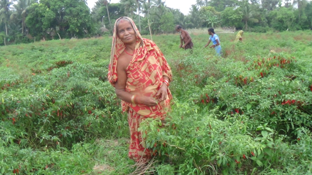 Organic Kitchen Gardens in 5 Disastered Villages